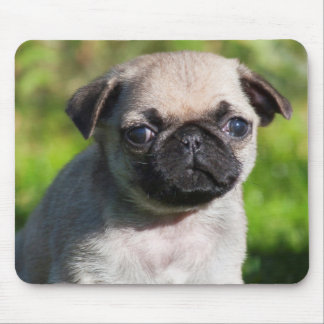 USA, California. Pug Puppy Looking At You Mouse Mat
