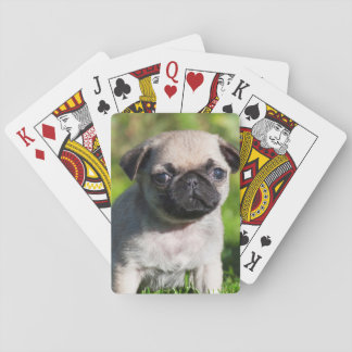 USA, California. Pug Puppy Looking At You Playing Cards