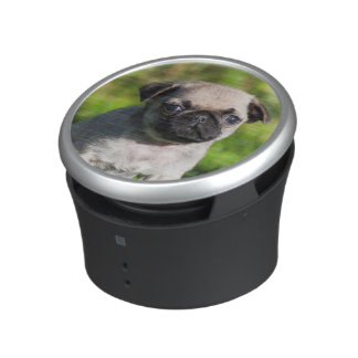 USA, California. Pug Puppy Looking At You Speaker