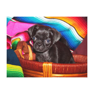 USA, California. Pug Puppy Sitting In Basket Stretched Canvas Print