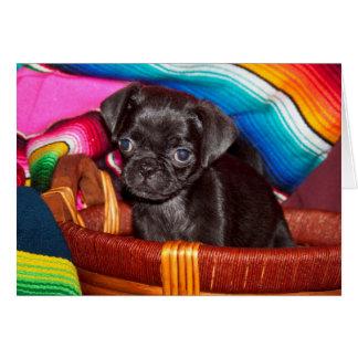 USA, California. Pug Puppy Sitting In Basket Card