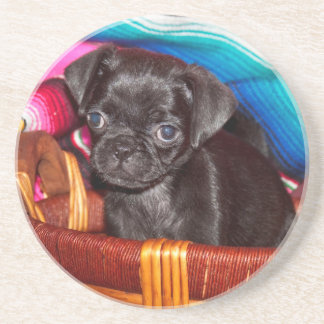 USA, California. Pug Puppy Sitting In Basket Coaster