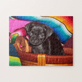 USA, California. Pug Puppy Sitting In Basket Jigsaw Puzzle