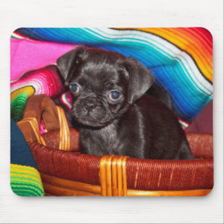 USA, California. Pug Puppy Sitting In Basket Mouse Mat