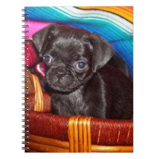USA, California. Pug Puppy Sitting In Basket Notebooks