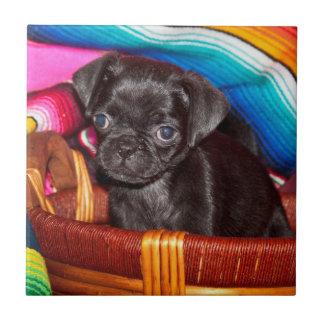 USA, California. Pug Puppy Sitting In Basket Tile