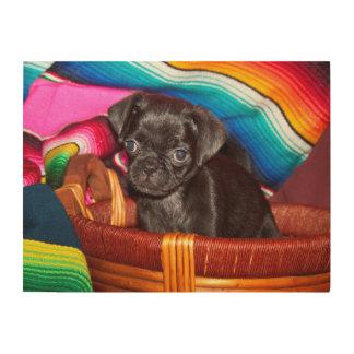 USA, California. Pug Puppy Sitting In Basket Wood Wall Art