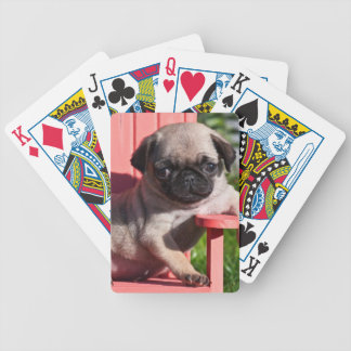 USA, California. Pug Puppy Slouching Bicycle Playing Cards