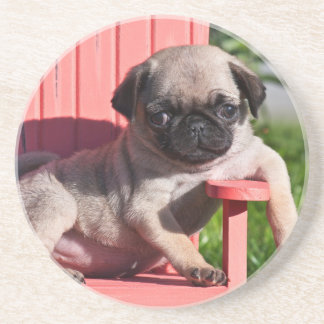 USA, California. Pug Puppy Slouching Coaster