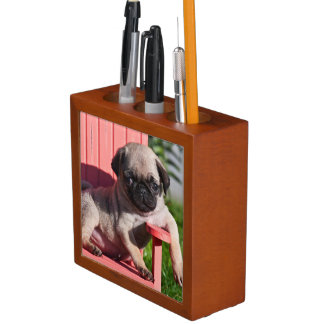 USA, California. Pug Puppy Slouching Desk Organiser