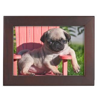 USA, California. Pug Puppy Slouching Keepsake Box