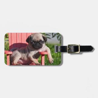 USA, California. Pug Puppy Slouching Luggage Tag