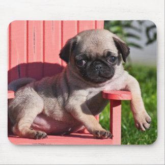 USA, California. Pug Puppy Slouching Mouse Mat
