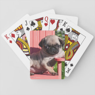 USA, California. Pug Puppy Slouching Playing Cards