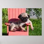 USA, California. Pug Puppy Slouching Poster