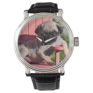 USA, California. Pug Puppy Slouching Watch