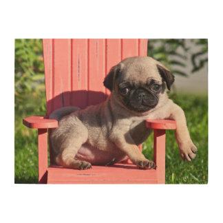 USA, California. Pug Puppy Slouching Wood Print