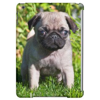 USA, California. Pug Puppy Standing In Grass