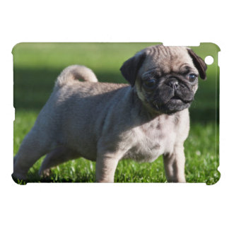 USA, California. Pug Puppy Standing In Grass 2 Cover For The iPad Mini