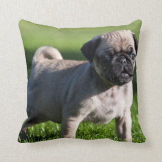 USA, California. Pug Puppy Standing In Grass 2 Cushion