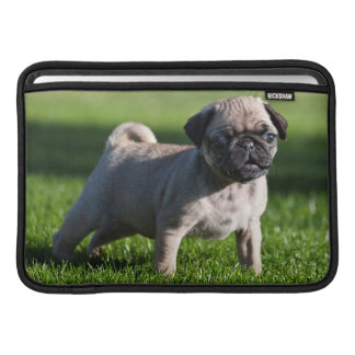 USA, California. Pug Puppy Standing In Grass 2 Sleeve For MacBook Air