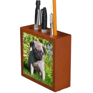 USA, California. Pug Puppy Standing In Grass Desk Organiser