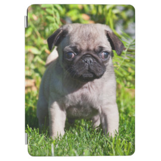 USA, California. Pug Puppy Standing In Grass iPad Air Cover