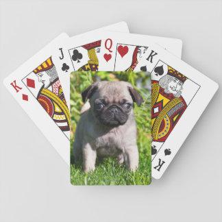USA, California. Pug Puppy Standing In Grass Poker Deck
