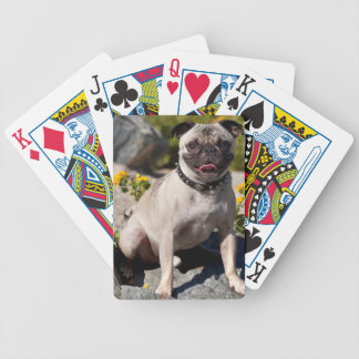 USA, California. Pug Sitting On Boulder Bicycle Playing Cards