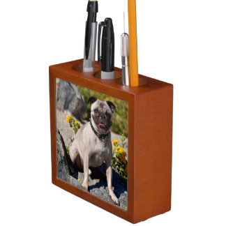 USA, California. Pug Sitting On Boulder Desk Organiser