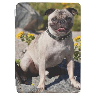 USA, California. Pug Sitting On Boulder iPad Air Cover