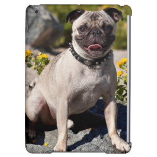 USA, California. Pug Sitting On Boulder iPad Air Cover