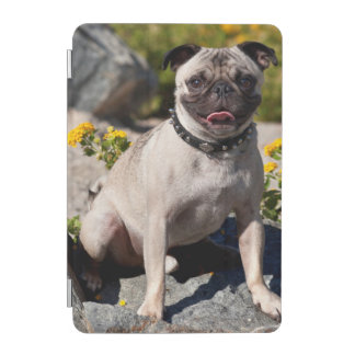 USA, California. Pug Sitting On Boulder iPad Mini Cover