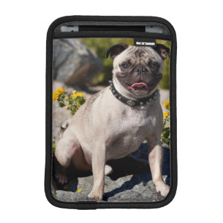 USA, California. Pug Sitting On Boulder iPad Mini Sleeve