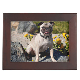 USA, California. Pug Sitting On Boulder Keepsake Box