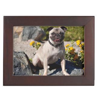 USA, California. Pug Sitting On Boulder Memory Box