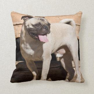 USA, California. Pug Standing On Wooden Bench Cushion