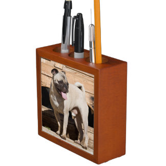 USA, California. Pug Standing On Wooden Bench Desk Organiser