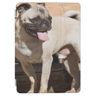 USA, California. Pug Standing On Wooden Bench iPad Air Cover