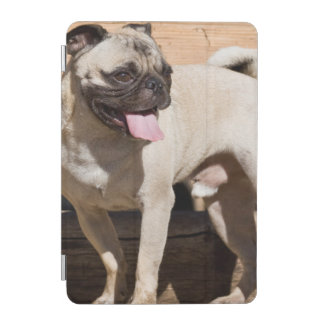 USA, California. Pug Standing On Wooden Bench iPad Mini Cover