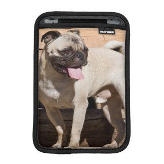 USA, California. Pug Standing On Wooden Bench iPad Mini Sleeve