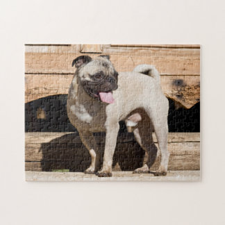 USA, California. Pug Standing On Wooden Bench Jigsaw Puzzle