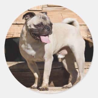 USA, California. Pug Standing On Wooden Bench Round Sticker