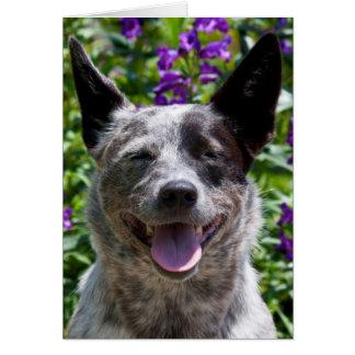 USA, California. Queensland Healer Smiling Card