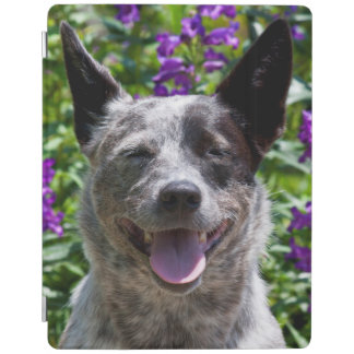 USA, California. Queensland Healer Smiling iPad Cover