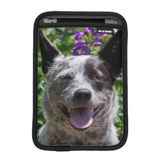 USA, California. Queensland Healer Smiling iPad Mini Sleeve