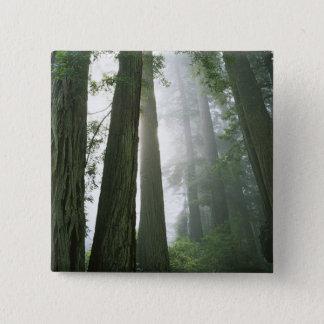 USA, California, Redwood National Park, 15 Cm Square Badge