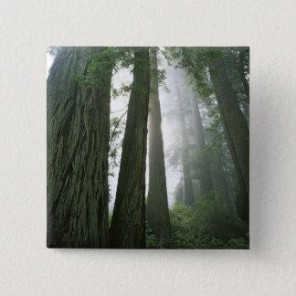 USA, California, Redwood National Park, 2 15 Cm Square Badge