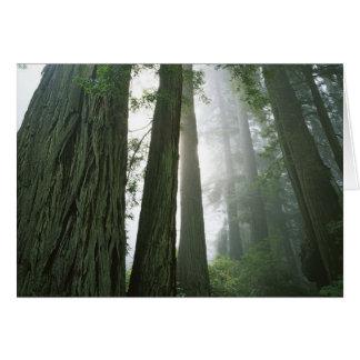 USA, California, Redwood National Park, 2 Greeting Card