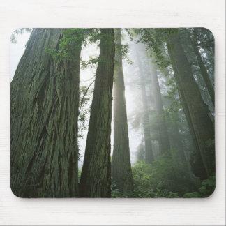 USA, California, Redwood National Park, 2 Mouse Mat